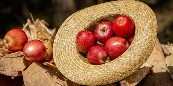 Borough market apple day header image